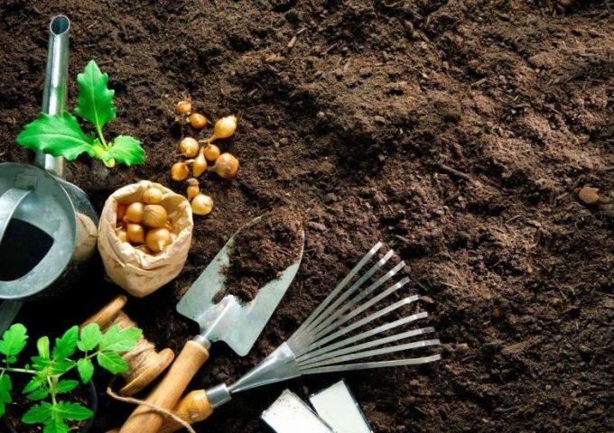 preparando-la-tierra-para-el-huerto